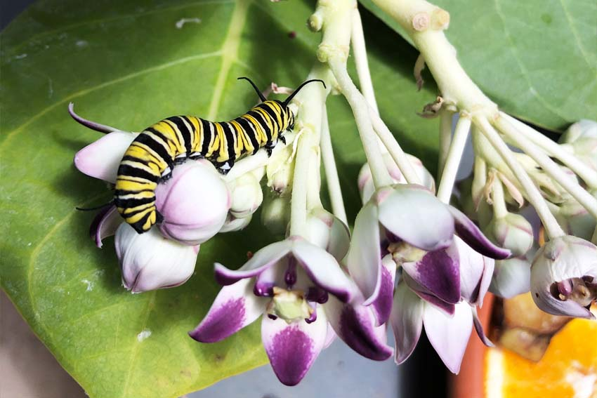 Casa Galpy Butterfly Farm Aruba - Secret life of butterflies